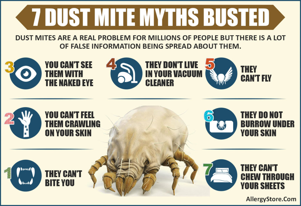 7 Dust Mite Myths Busted